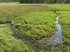 creek in the meadow