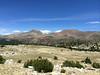 Mt Dana and Mt Gibbs