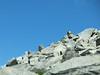 Marmot greeted me near the summit