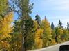 Fall Colors - Rock Creek Road