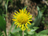 cool yellow flower