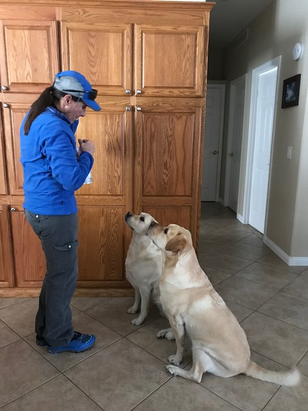 Molly and Walker waiting for treats before we left