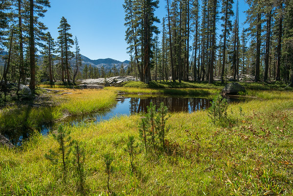 california; sierra nevada; yosemite national park A small patches of water in a dry area. I would love to see this place in the spring.
