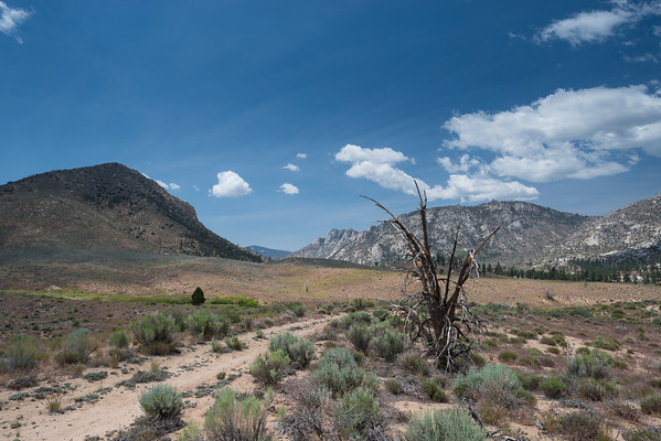 california; dome land wilderness; sierra national forest; sierra nevada Perhaps a causalty of the Manter Fire?