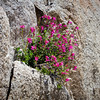 Flowers in a Rock