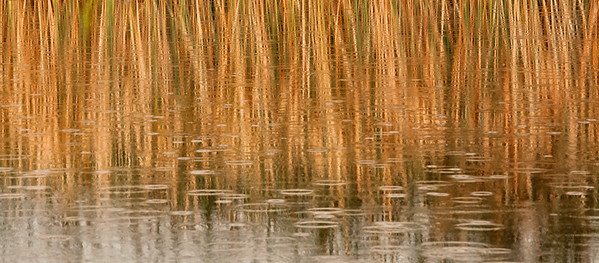 Reeds and Rain, Owens River