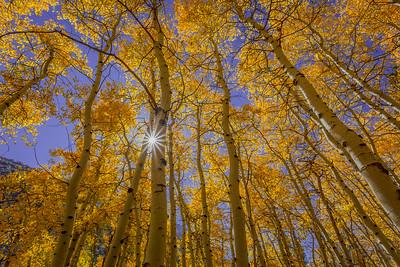 Aspen With Sunstar