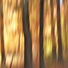 Fall, Abstact