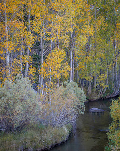 Aspen and Willows