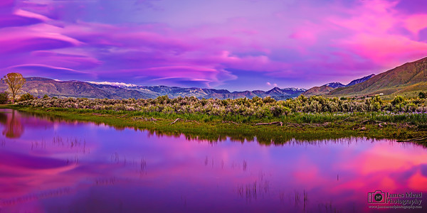 """Pink Harmony,"" Sweetwater Mountains Alpenglow at Sunset, West Walker River, Toiyabe National Forest, California"