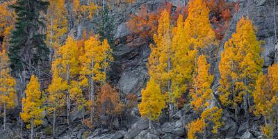Aspen and Granite