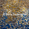 Aspen Leaves on Pond