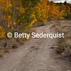 Fall Aspen and Roadway
