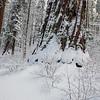 A Beautiful Snow