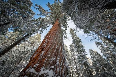 A Timeless Tree