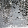 Fresh snow on a Giant Tree
