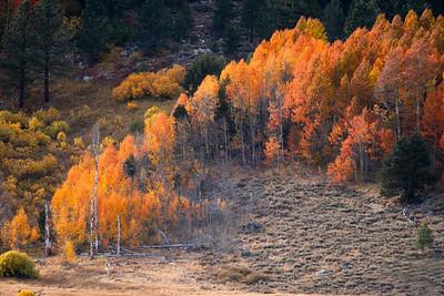 Reddish Aspens, Hope Valley