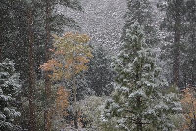 Mountain Snows