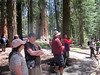 In the McKinley Giant Sequoia Grove