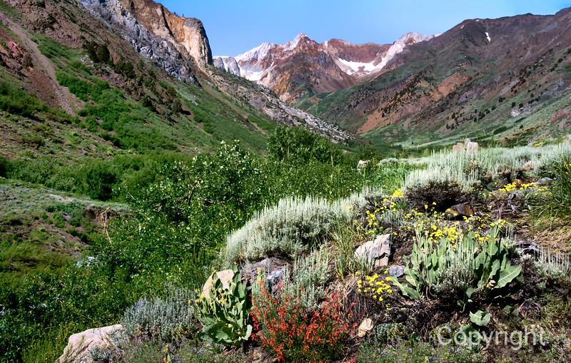 McGee Creek Wildflowers