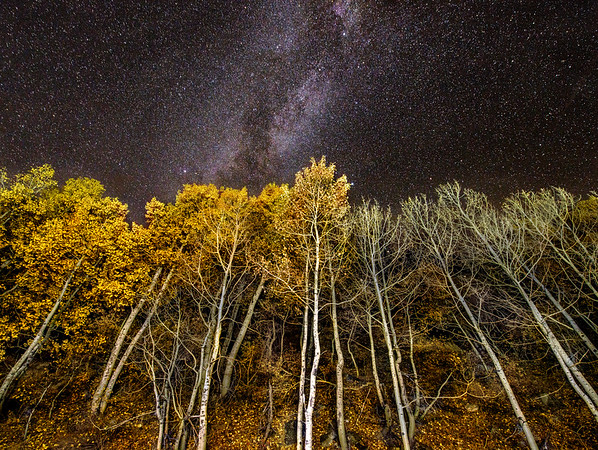 Lightpainted aspens along the June Lake Loop.
