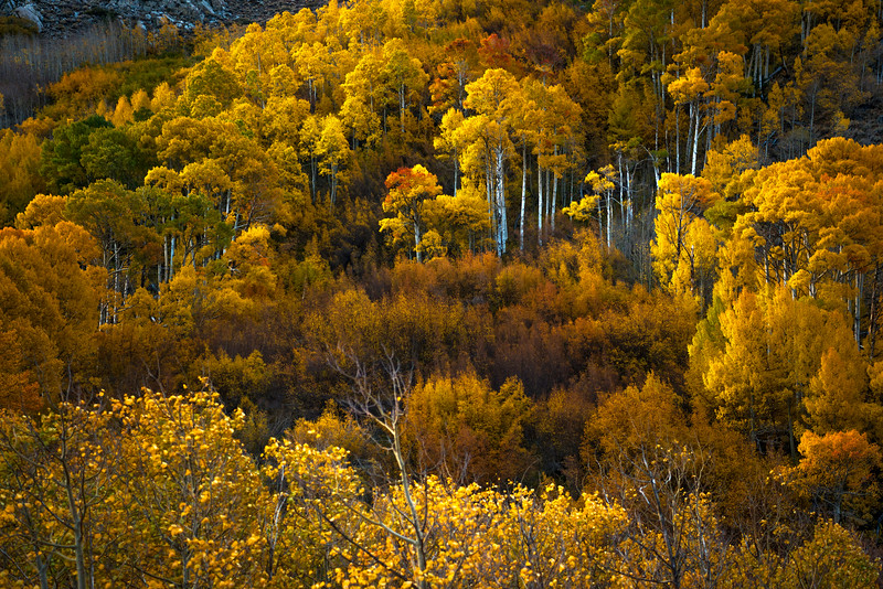Fall colors along the South Fork of Bishop Creek