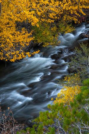 Fall color near Grant Lake