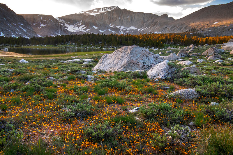 Wildflowers cover the ground near Long Lake with Mt. Langley in the background.