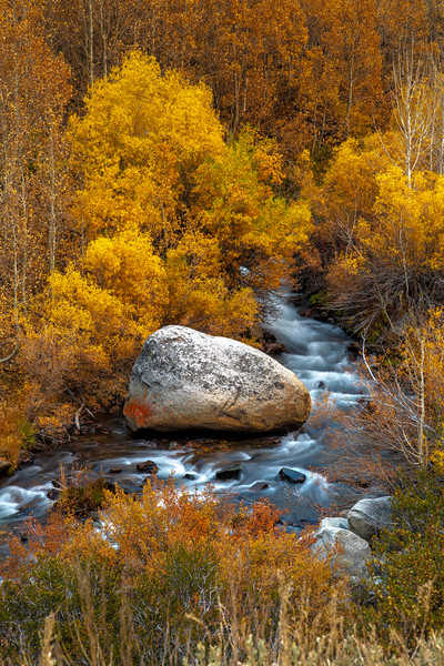 Fall Color - Bishop South Fork