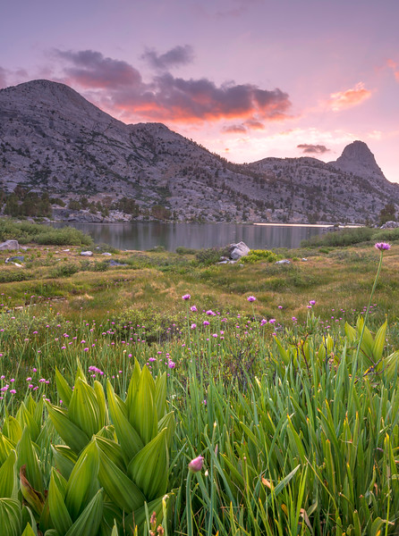 Views of wildflowers, Lower Rae Lake, and Fin Dome near sunset along the JMT.