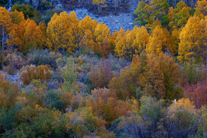 Fall Foliage on the South Fork of Bishop Creek