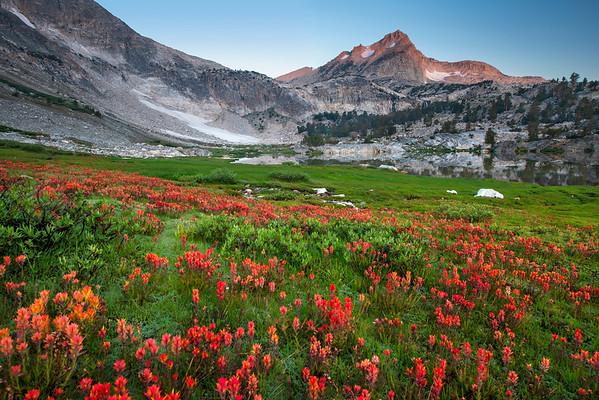 Wildflowers & North Peak - Saddlebag