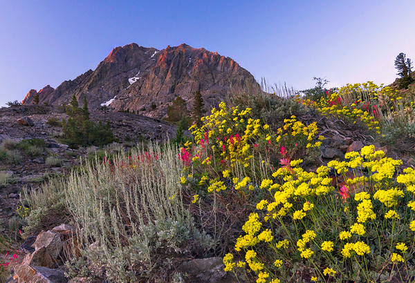Wildflowers and Carson Peak along the Rush Creek Trail.
