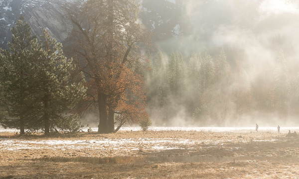 Mist-Covered Meadow