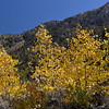 Lake Sabrina Fall Colors