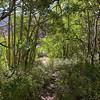 Walking around North Lake - one of my favorite aspen groves was half green, half bare already.