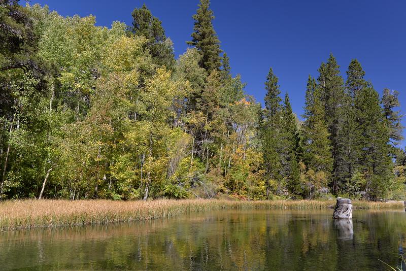 Weir Pond