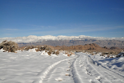 Road in Lone Pine Campground, view across to Inyos