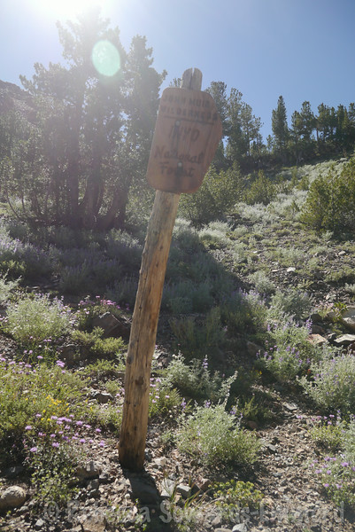 Starting up the trail - an old wilderness boundary sign.