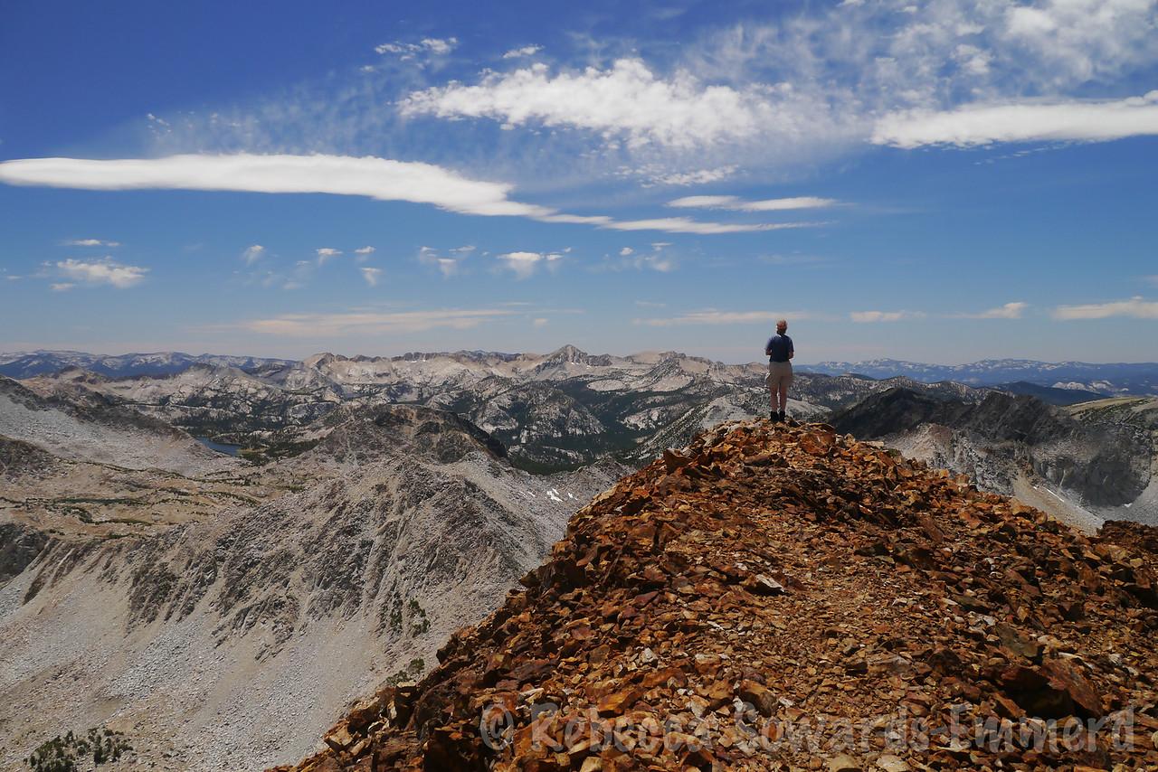 Robin on the summit