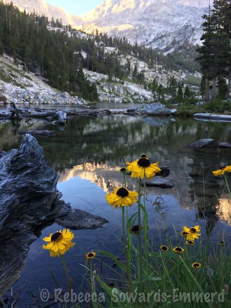 Sneezeweed and Lake Reflection