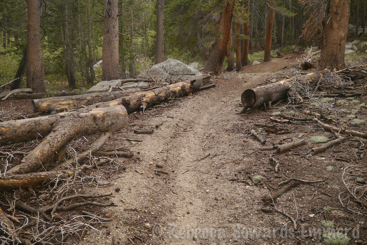 Even though this is no longer a maintained trail, it is easy to follow. When it faded away, it was still easy to pick it back up by looking for clues like these cut logs or blazes on the trees.