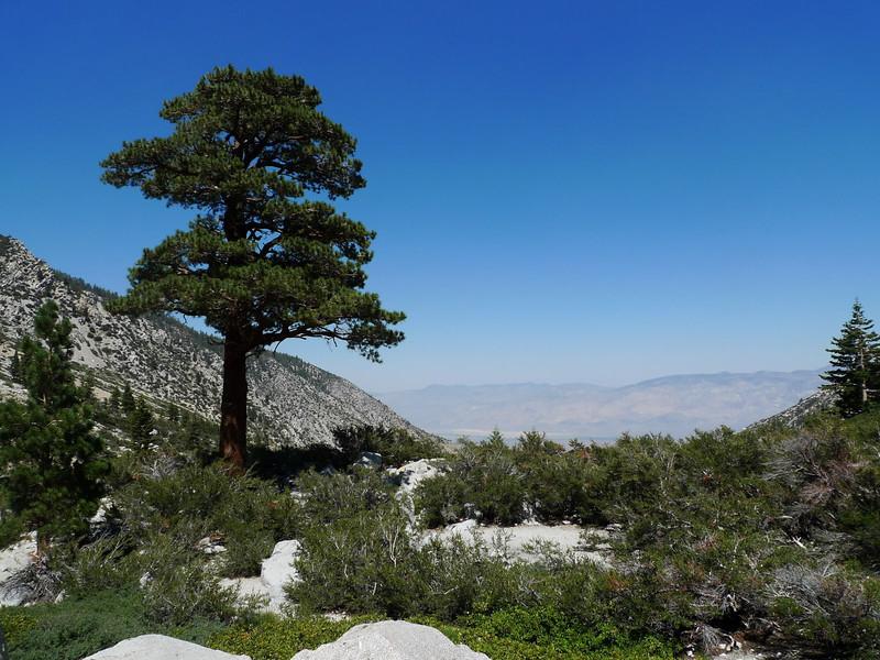 Reaching the treeline. Finally feeling like Sierra and not desert