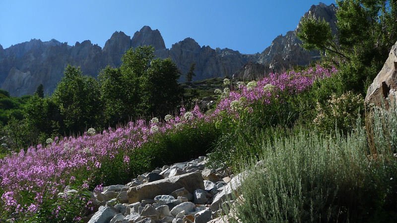 A beautiful patch of fireweed. Just beyond this was a patch of stinging nettles. Ouch!