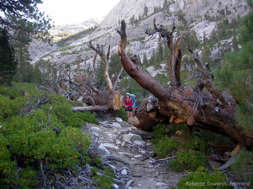 Pavla helps show off the scale of an enormous downed tree on the trail.