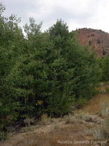 At the North Lake trailhead we start to see some signs of fall - little patches of yellow in the aspens.