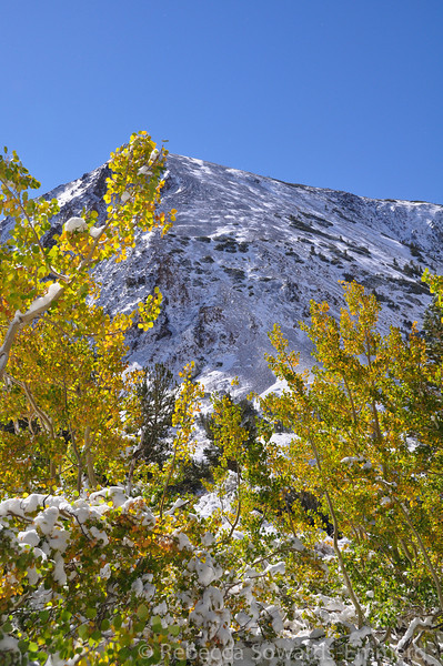 Aspens and Mt Olsen