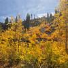 Colors near North Lake