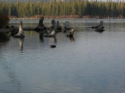 Lake Mary snags