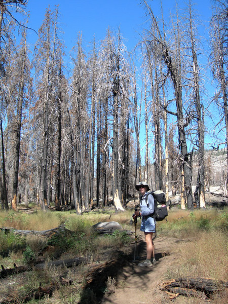 Back through the burned forest